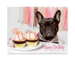 happy birthday bulldog cards set of 4 cards