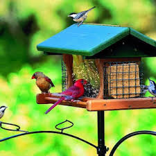 How To Attract Indigo Buntings To Your Backyard Attracting Indigo Buntings Nature Notes Blog