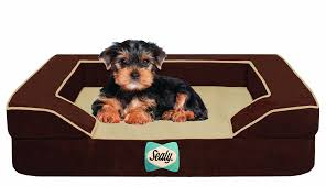 Puppy Beds Amazon Com Sealy Dog Bed For Dogs X Large Pet Supplies