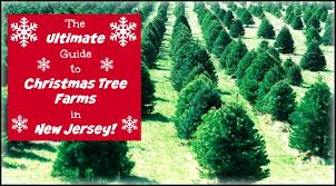 the ultimate guide to tree farms in new jersey things