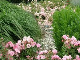 62 best carpet roses images on pinterest beautiful flowers