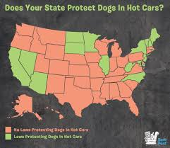 window state tx us 16 states with laws to protect dogs in cars barkpost