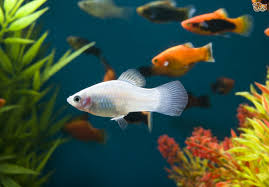 Types Of Aquarium Fish What Kind Of Fish Are You Playbuzz
