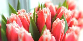 flowers jacksonville fl jacksonville fl florists wedding 32216 flowers 32225