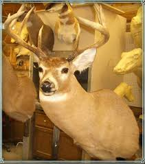 deer heads and mounts for retail sale montana taxidermy and