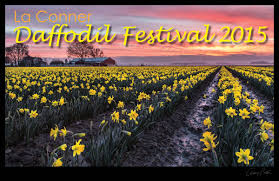 skagit valley tulip festival bloom map la daffodil festival 2015 la