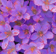 gifs hermosos flores encontradas en la web animation zone