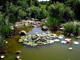 man made pond backyard u2014 home landscapings backyard pond ideas