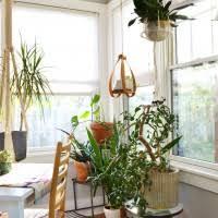 Jungle Home Decor Captivating Decorating Interior Design Expressing Divine Home