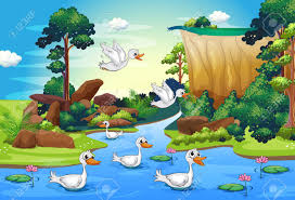 tree duck stock photos u0026 pictures royalty free tree duck images