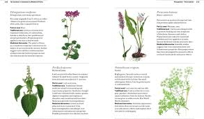 218 best native plants images on pinterest native plants hedges the gardener u0027s companion to medicinal plants an a z of healing