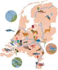 world wide fund for nature saskia rasink