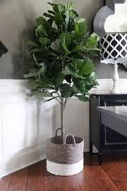 best 25 plant decor ideas on pinterest house plants sweetlooking imitation house plants best 25 fake ideas on pinterest