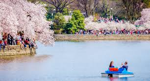 Cherry Blossom Map Of The National Cherry Blossom Festival In Washington D C
