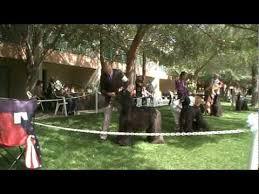 afghan hound club of st louis ch agha djari u0027s true lies at the mesa arizona afghan hound