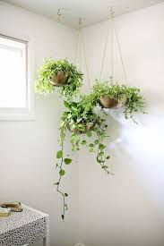 room with plants pin by izzati hanum abd hamid on s o m e d a y m a y b e pinterest