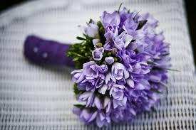 fiori viola fiori viola briciolanellatte weblog