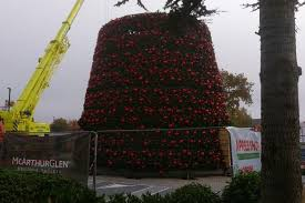 cheshire oaks u0027 famous giant christmas tree is on the way up