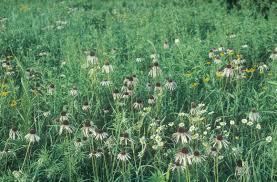 native prairie plants scott vogt author at dyck arboretum