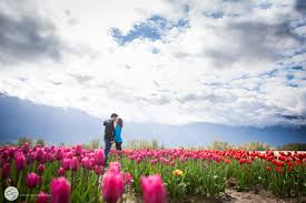charlene stam photography engagement photos in the tulip fields