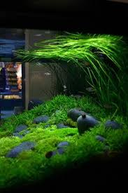 Aquascaping Freshwater Aquarium What An Abundance Of Colours In This Tank