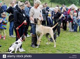queen s dogs brighton uk 12th june 2016 dogs of all sizes at the annual bark