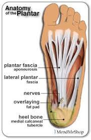 Foot Anatomy Nerves 115 Best Plantar Fasciitis Heel Spurs U0026 Foot Pain Images On