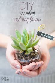 succulent wedding favors succulent wedding favors you can make fab you bliss