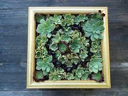 wall planter ideas u2013 upsite me