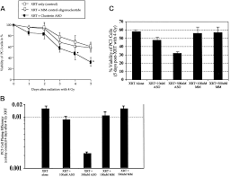 enhanced radiation sensitivity in prostate cancer by inhibition of