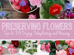 preserving flowers green in real pressing dehydrating and preserving flowers