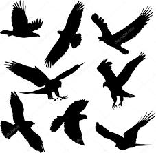 birds silhouettes u2014 stock vector nebojsa78 2664507