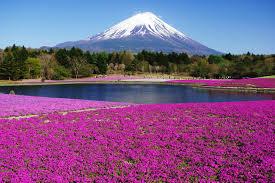 Flower Wallpaper Home Decor Garden Design With Beautiful Flower Landscapes Nature Mount Fuji