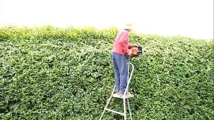 native hedging plants uk 200 x wonderhedge co uk hedge plant gardening hedges and
