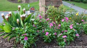 Mailbox Flower Bed Dharuma Hydrangea And Curcuma For A Sun Loving Garden