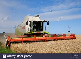 claas combine harvesting wheat in west norfolk fens at night stock