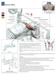 Bench Press Program Chart Best 25 Bench Press Workout Ideas On Pinterest Bench Press