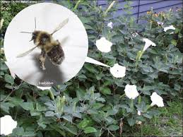 Bee Deterrent For Patio Carpenter Bees And Their Control United Exterminating Company