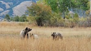 Minnesota wild animals images United states safaris where to see american wildlife cnn travel jpg