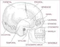 wiki health fabulous anatomy worksheets