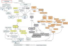 nervous system concept map nervous system tissues and cells whattissues form the nervous