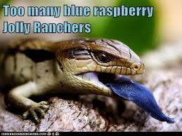 Reptile Memes - i can has cheezburger blue raspberry funny animals online