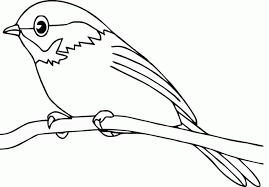 coloring trendy birds coloring pied flycatcher birds