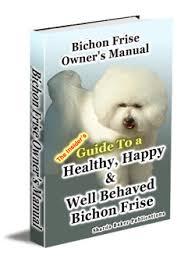 bichon frise 20 pounds bichon frise non sporting group dog breeds dog nation