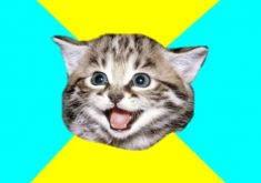 Grumpy Cat Meme Creator - sad birthday cat meme generator best cat wallpaper 2018