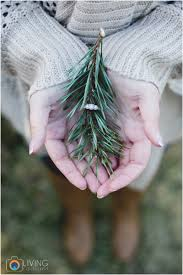 amber chris engaged christmas tree farm engagement session