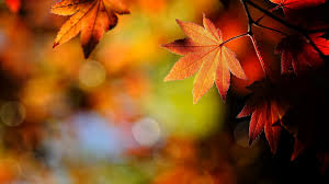Cute Fall Wallpaper by Halloween Fall Wallpapers Group 65