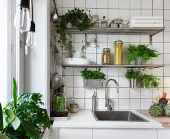 plante de cuisine ma maison au naturel cultivez des plantes aromatiques dans votre