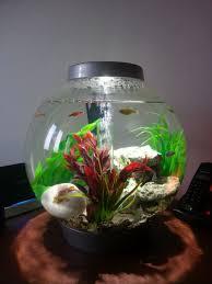 baby biorb 15l fish tank aquarium nelson lancashire pets4homes