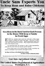 Raising Meat Chickens Your Backyard by Backyard Chicken Eggonomics How Much Does It Really Cost To Raise